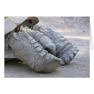 Sulcata Tortoise Card
