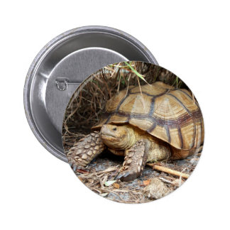 Sulcata Tortoise Chillin' Pins