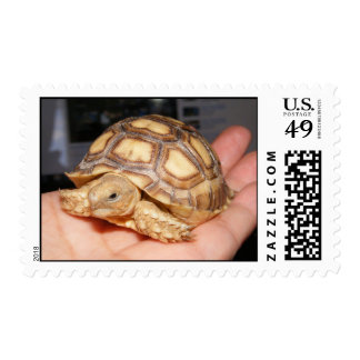 Sulcata Tortoise Hatchling Postage