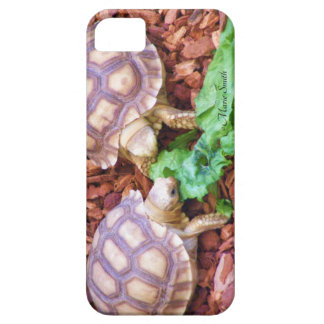 Sulcata Tortoise Hatchlings iPhone SE/5/5s Case