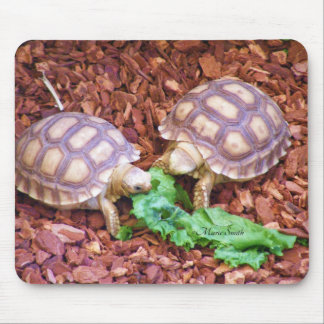 Sulcata Tortoise Hatchlings Mouse Pad