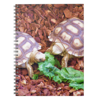 Sulcata Tortoise Hatchlings Notebook