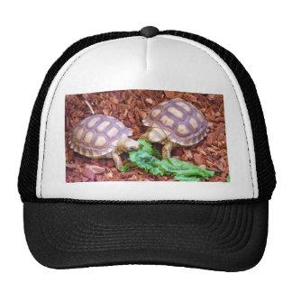 Sulcata Tortoise Hatchlings Trucker Hat