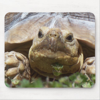 Sulcata Tortoise Mouse Pad