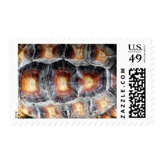 Sulcata Tortoise Shell Stamps
