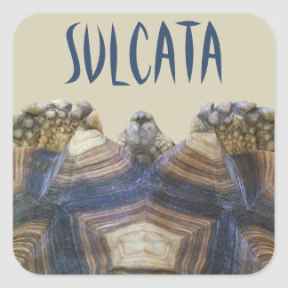 Sulcata Tortoise Stickers Square Stickers