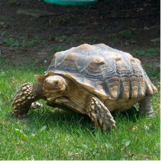 Sulcata Tortoises Acrylic Cut Outs