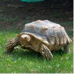 "Sulcata Tortoises Statuette<br><div class=""desc"">Sulcata Tortoises</div>"