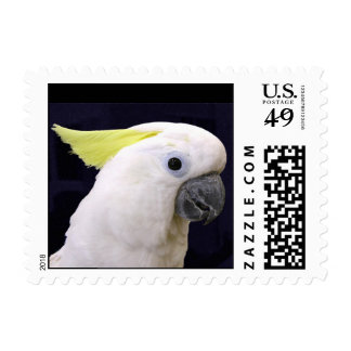 Sulfer Crested Cockatoo (Small) Stamps