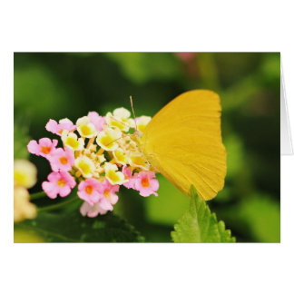 Sulfur Butterfly On Lantana Greeting Cards