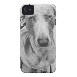 Sullen Weimaraner  B&W iPhone 4 Case-Mate Cases