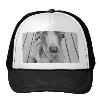 Sullen Weimaraner  B&W Trucker Hat