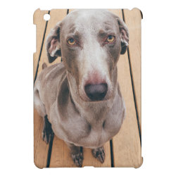 Case Savvy iPad Mini Glossy Finish Case with Weimaraner Phone Cases design