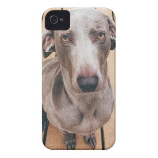 Sullen Weimaraner iPhone 4 Case-Mate Case