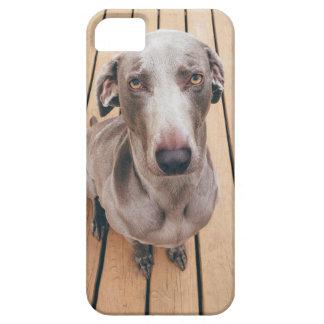 Sullen Weimaraner iPhone SE/5/5s Case