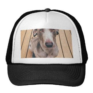 Sullen Weimaraner Trucker Hat