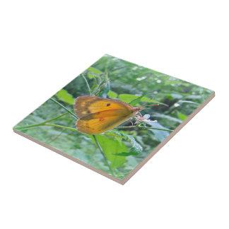 Sulpher Butterfly Ceramic Tile