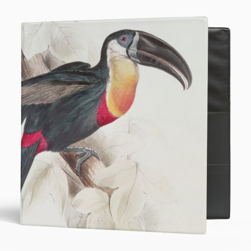 Sulphur and white breasted Toucan, 19th century 3 Ring Binder
