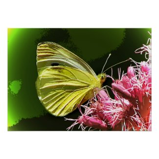 Sulphur Butterfly Impressions Posters