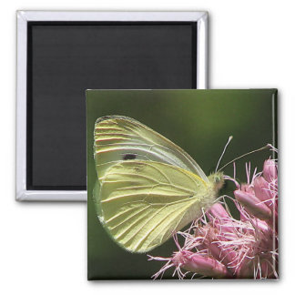 Sulphur Butterfly Fridge Magnet