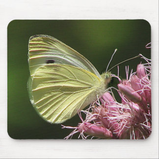Sulphur Butterfly Mouse Pad