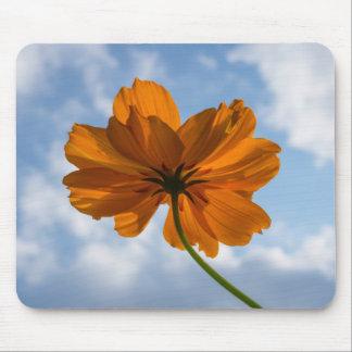 Sulphur Cosmos Orange Flower Mousepad