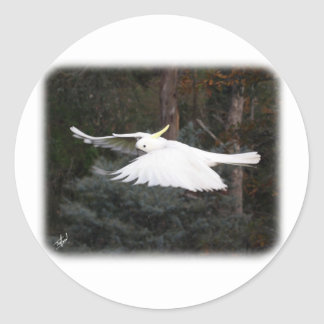 Sulphur Crested Cockatoo 9Y336D-027 Classic Round Sticker