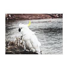 Sulphur-Crested Cockatoo Canvas Print
