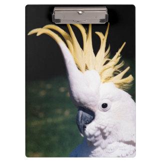 Sulphur-crested Cockatoo Clipboard