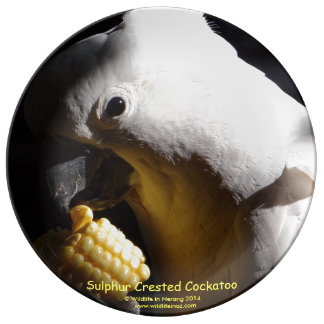 Sulphur Crested Cockatoo Dinner Plate