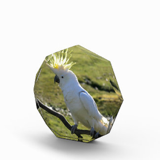 Sulphur-Crested Cockatoo in Australia Acrylic Award