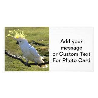 Sulphur-Crested Cockatoo in Australia Photo Card Template