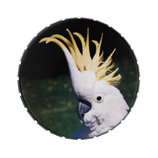 Sulphur-crested Cockatoo Jelly Belly Tin
