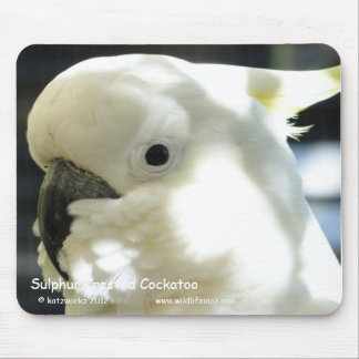 Sulphur Crested Cockatoo Mouse Pads