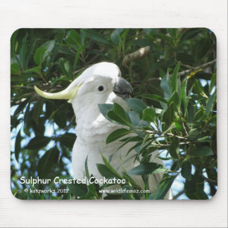Sulphur Crested Cockatoo Mousepads
