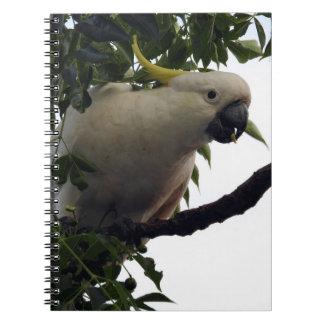Sulphur-Crested Cockatoo Notebook