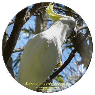 Sulphur Crested Cockatoo Porcelain Plate