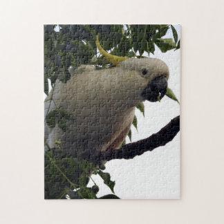 Sulphur-crested Cockatoo Puzzle