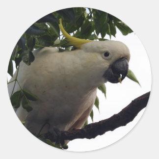 Sulphur-Crested Cockatoo Sticker