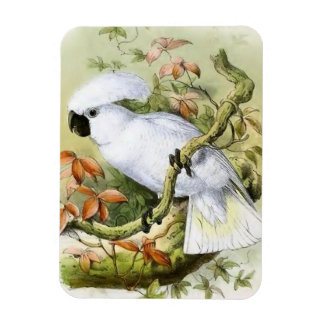 Sulphur-Crested Cockatoo Vintage Illustration Rectangular Magnets