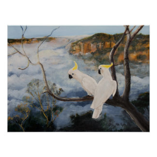 Sulphur Crested Cockatoos in The Blue Mountains Poster