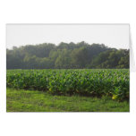 Sulphur Tobacco Field Greeting Card