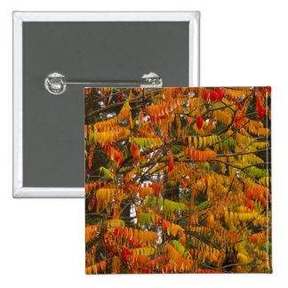Sumac tree in autumn color in Whitefish, Pinback Button