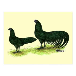 Sumatra Black Chickens Post Cards