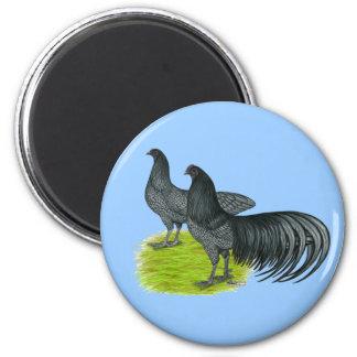 Sumatra:  Blue Pair Fridge Magnets