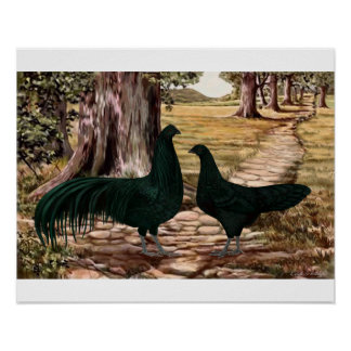 Sumatra Rooster and Hen in Wooded Setting Poster