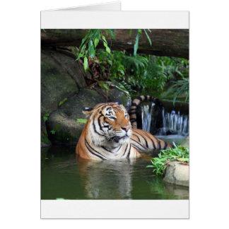 Sumatra tiger card