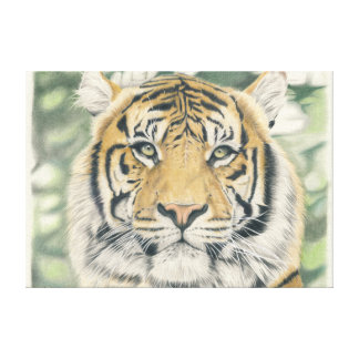 Sumatra tiger - coloured pencil design canvas print