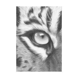Sumatra tiger eye - pencil drawing canvas print