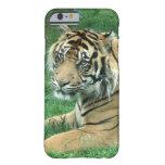 Sumatra Tiger iPhone 6 Case at Zazzle